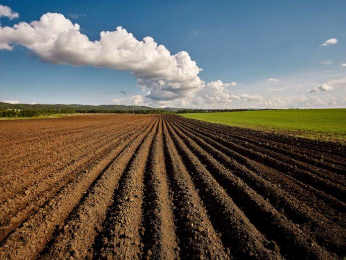 Польза от еды возможна при изменении подхода к ведению сельского хозяйства
