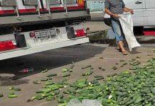 В Беларуси свежие овощи попадают на свалку или под колеса авто