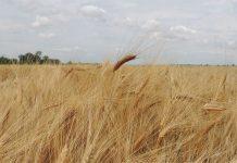 Переполох на полях Херсонской области