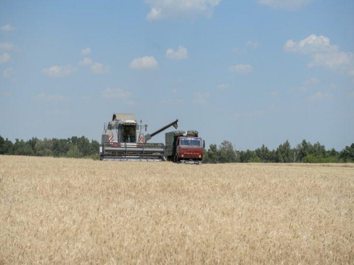 Скромный урожай в Воронежской области существенно повлияет на цены