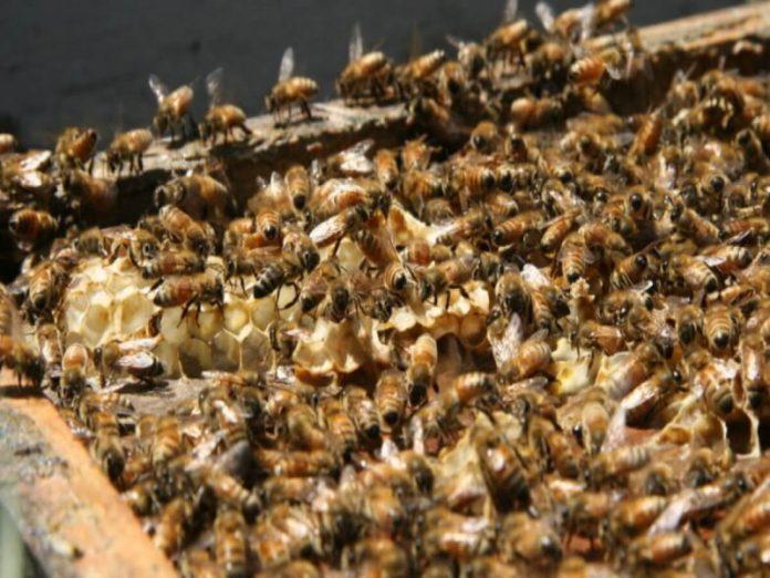 Названа причина массовой гибели пчел в Башкирии