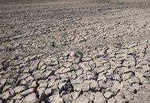 Из-за засухи свердловские аграрии боятся потерять урожай