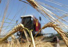 Глава алтайского минсельхоза призывает аграриев к сокращению посевов зерновых