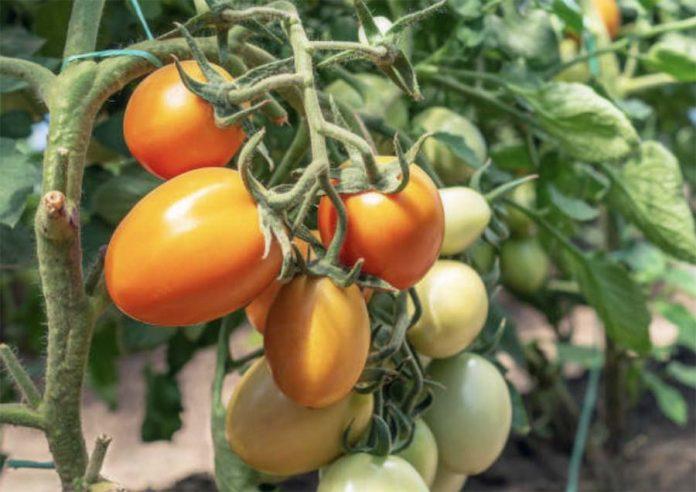 Календарь овощевода - Июль