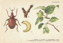 Казарка - Вредители плодовых культур