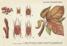Красный яблонный клещ ‒ Вредители плодовых культур