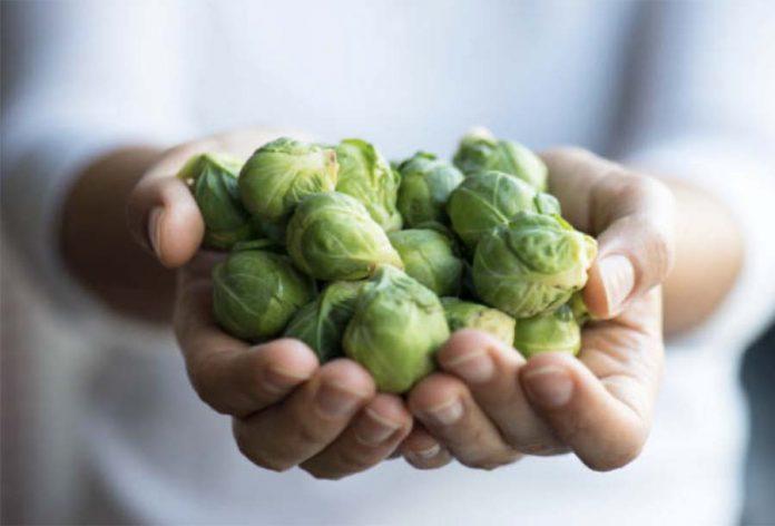 Основные особенности овощных культур – Брюссельская капуста