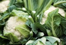 Основные особенности овощных культур - Капуста цветная