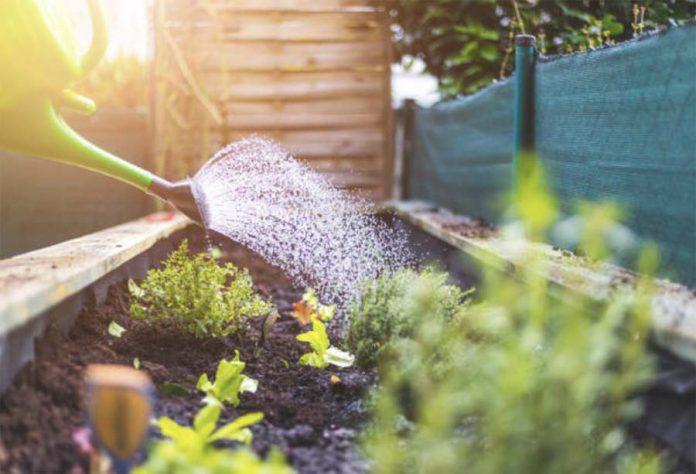 Полив и рыхление овощных культур