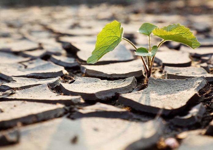 Требования овощных растений к условиям внешней среды