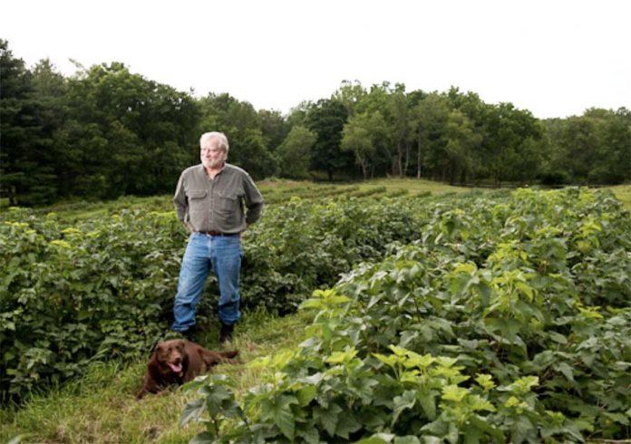 Упрямый фермер, который вернул Америке черную смородину