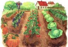 Выбор и освоение участка под овощные культуры