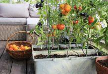 Выращивание овощей в комнатных условиях