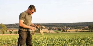 Засуха и жара: как не потерять урожай?