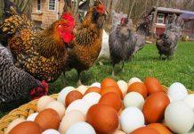 В Мурманской области за полгода поголовье птицы сократилось на 90%