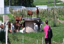 Фермерам могут разрешить строить гостиницы на своих участках