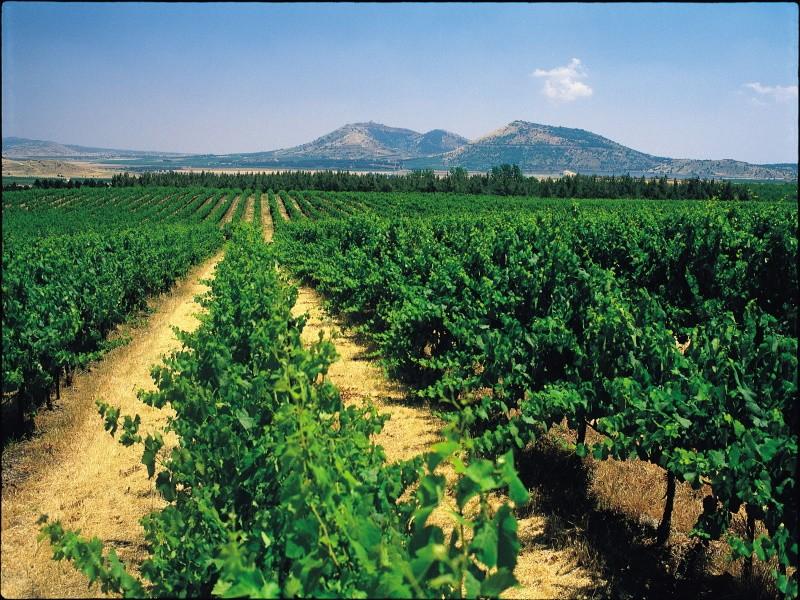 В Израиле планируют провести крупнейшую за 30 лет реформу сельского хозяйства