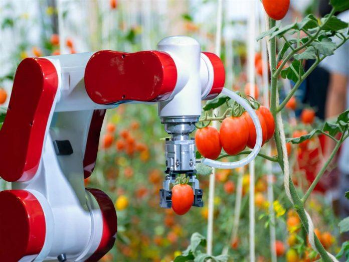 Ярославские ученые помогли роботам эффективнее собирать урожай