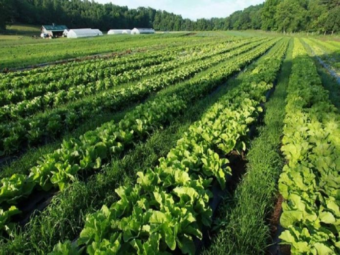 Органическое сельское хозяйство вредит окружающей среде — эксперт