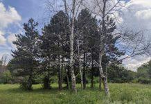 В дендрарии Михайловска погибают редкие растения и деревья