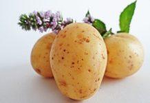 Голландские ученые нашли способ улучшения селекции картофеля