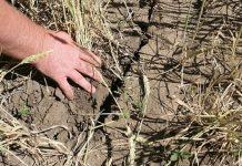Омские аграрии несут многомиллионные убытки