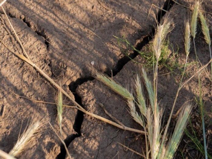 Погодные условия нанесли сельскому хозяйству Удмуртии огромный ущерб