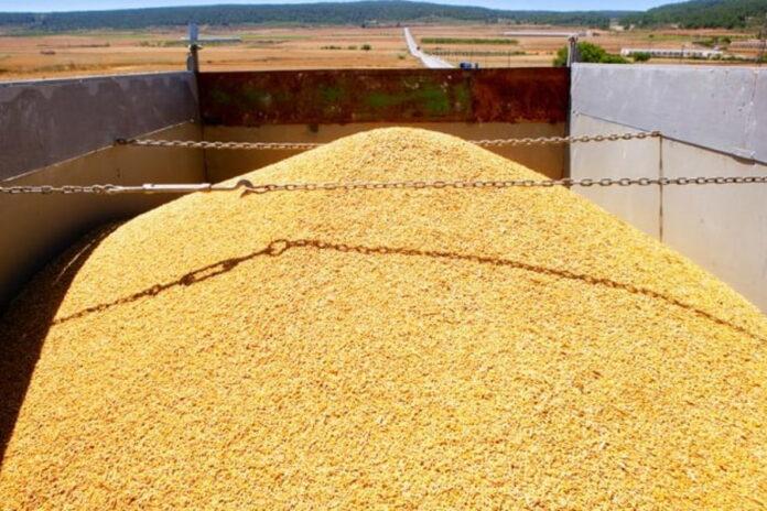 Казахстан зафиксировал рост серого импорта пшеницы из России