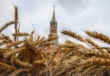 В России выросли экспортные пошлины на пшеницу, ячмень и кукурузу