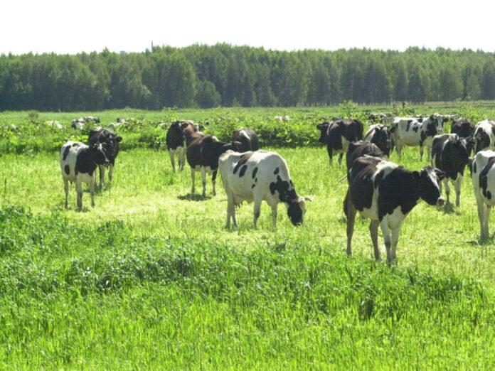 В Челябинской области выросли цены производителей сельхозпродукции