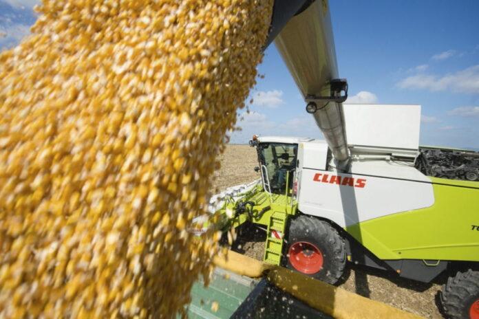 Российские аграрии приступили к уборке кукурузы и подсолнечника