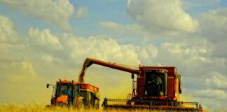Недополученная выручка российских аграриев из-за пошлин на экспорт зерна составит миллиарды долларов