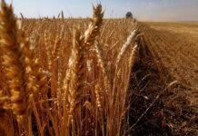 Погодные катаклизмы нанесли аграриям ущерб в десятки миллиардов рублей