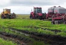 В Прикамье в этом году серьезно снизилась урожайность