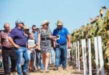 Новые агрономические опыты и селекционные достижения Corteva представит сразу на трех АгроАкадемиях Pioneer в августе