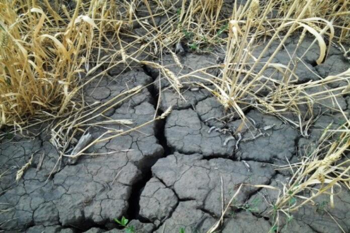 Катастрофа в Башкирии: аграрии ошеломлены небывалой засухой