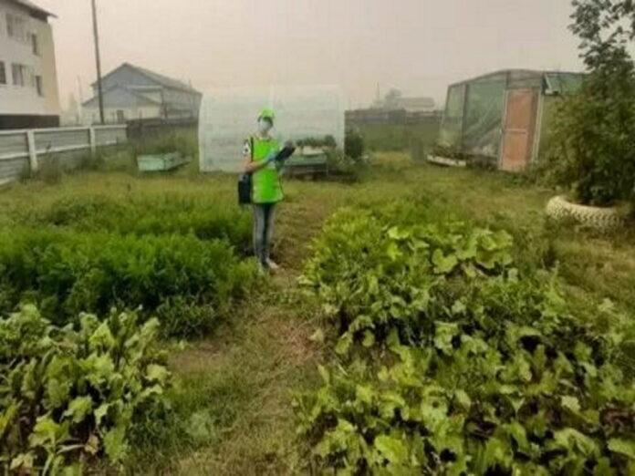 В августе в России пройдет первая сельскохозяйственная микроперепись