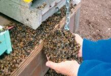 Пчеловоды Красноярского края сообщили о гибели 20 миллионов пчел