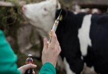 В России ужесточат контроль за применением антибиотиков в АПК
