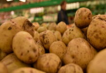 Дожди и засушливая погода грозят снижением урожая крупного картофеля