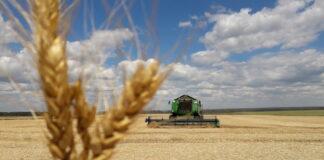 Хлеборобы Оренбургской области собрали худший за 11 лет урожай зерновых