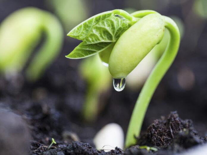 Хабаровский институт сельского хозяйства оштрафован за неправильное применение агрохимикатов