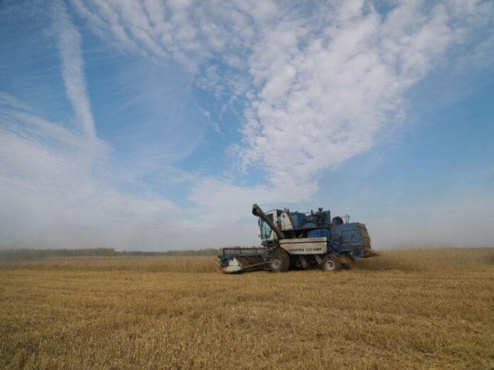 Засушливая погода снизила на 30% урожай зерновых в Кировской области