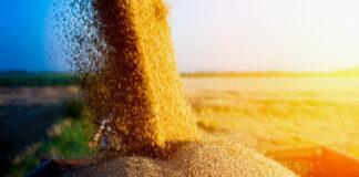 Bloomberg: Россия может потерять статус главного мирового экспортера пшеницы