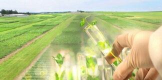Для повышения урожайности сельскохозяйственных культур будут созданы новые способы селекции