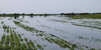 Аграрии испытывают сложности с получением выплат от страховых компаний за пострадавший при ЧС урожай