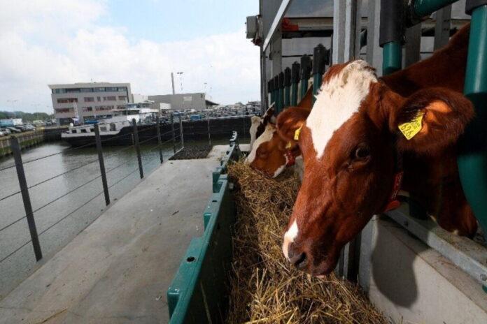 В Нидерландах запустили первую в мире безотходную плавучую ферму