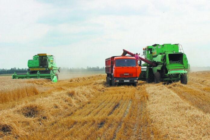 В Оренбуржье собрали урожай в два раза меньше прошлогоднего
