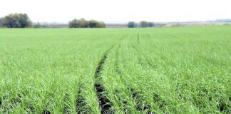 Рост цен на удобрения требует новых решений от аграриев