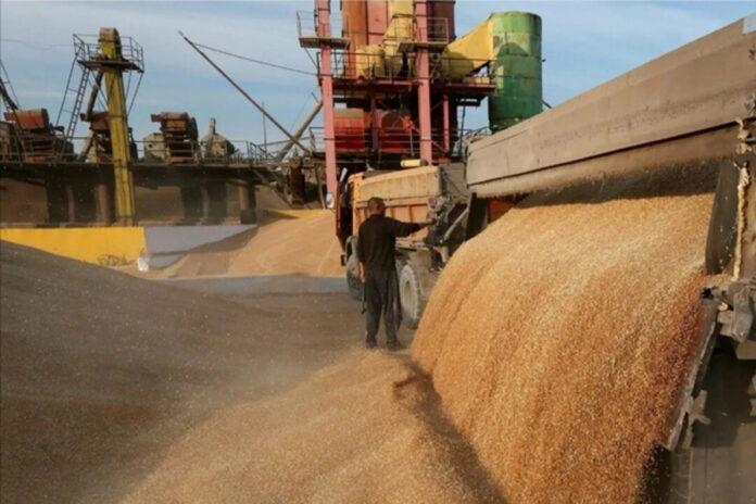 Зерновой союз предупредил о падении выручки аграриев на 40%